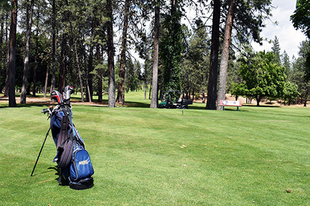 A golf bag stand on the green with tall pine trees in the background